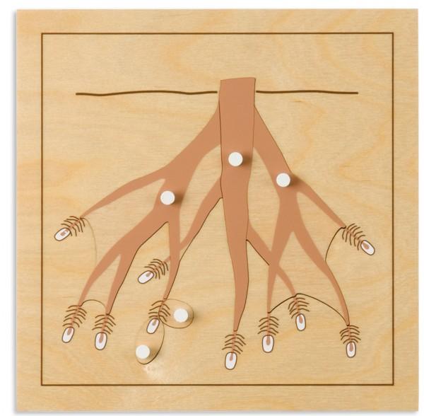 Botanisches Puzzle Wurzel Karotte