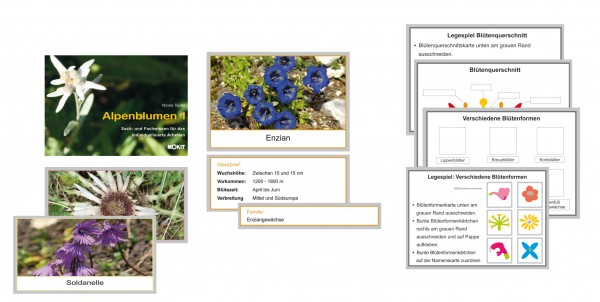 Alpenblumen 1