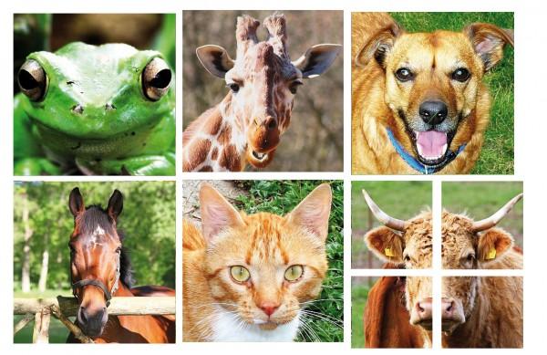Tiergesichter Set mit 9 Puzzle