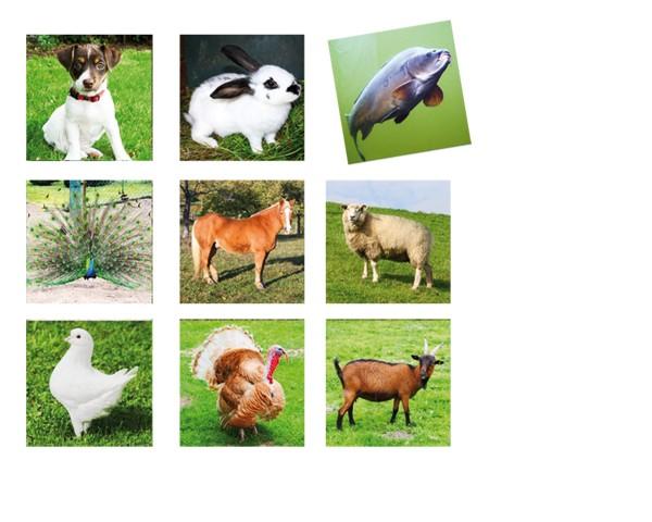 Tiere Memory 36-teilig