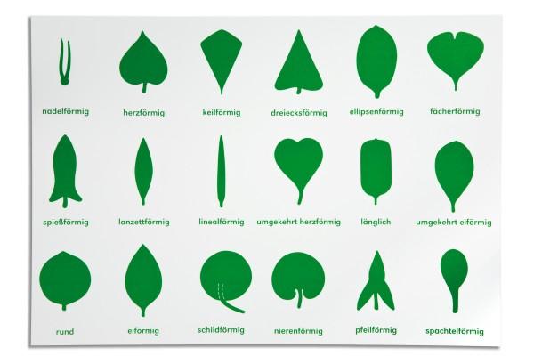 Lernplakat Botanische Kommode