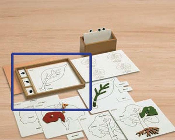 Kasten für Kopiervorlagen Botanische Puzzles